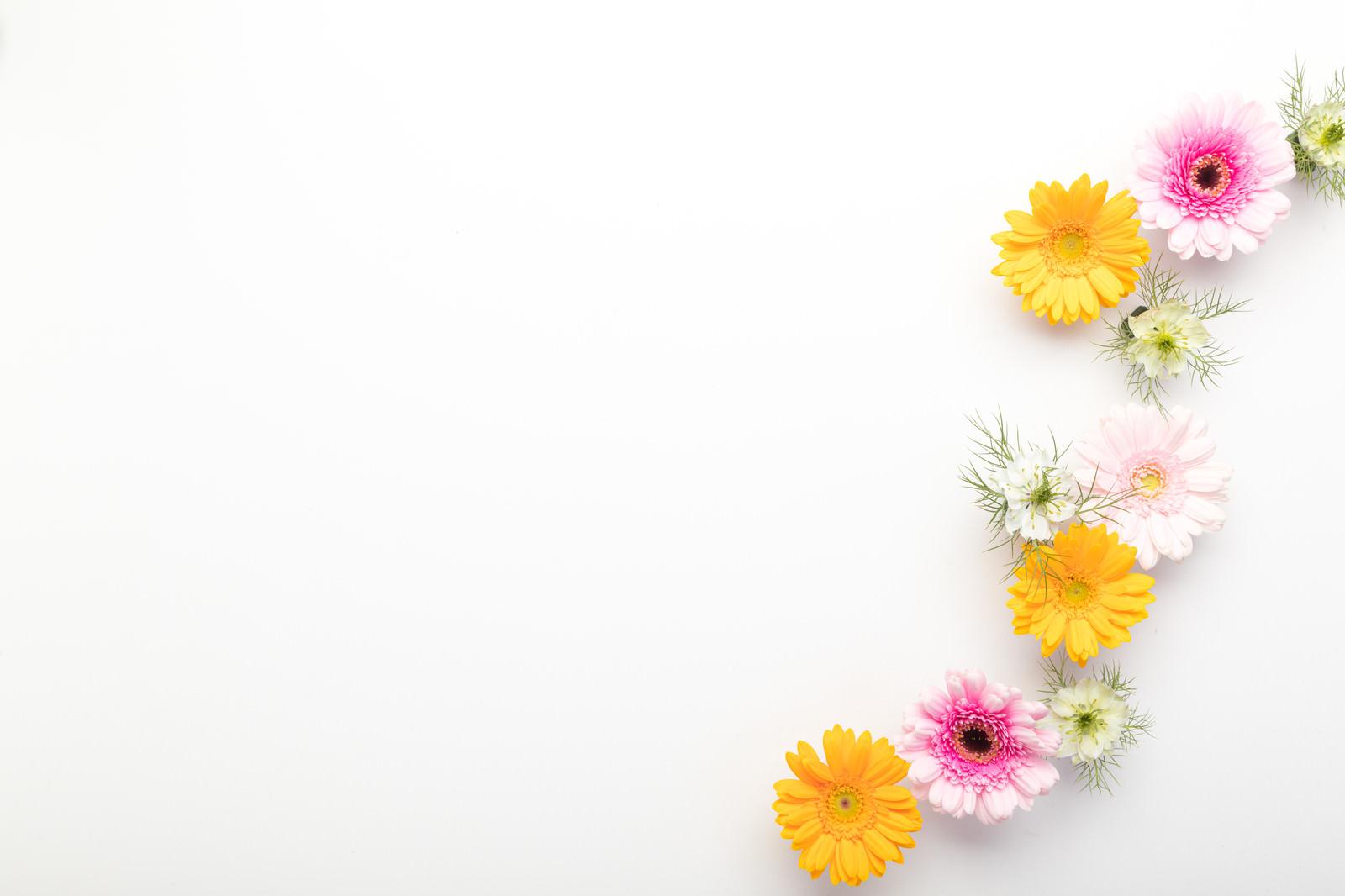 「文字を入れやすいホワイトボードと生花」の写真