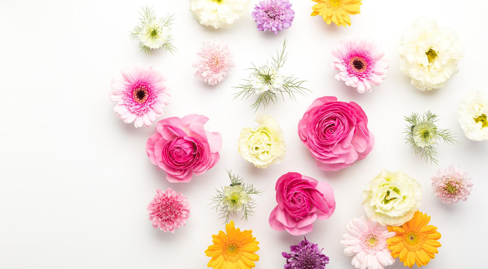 「等間隔に置かれたカラフルな花」の写真