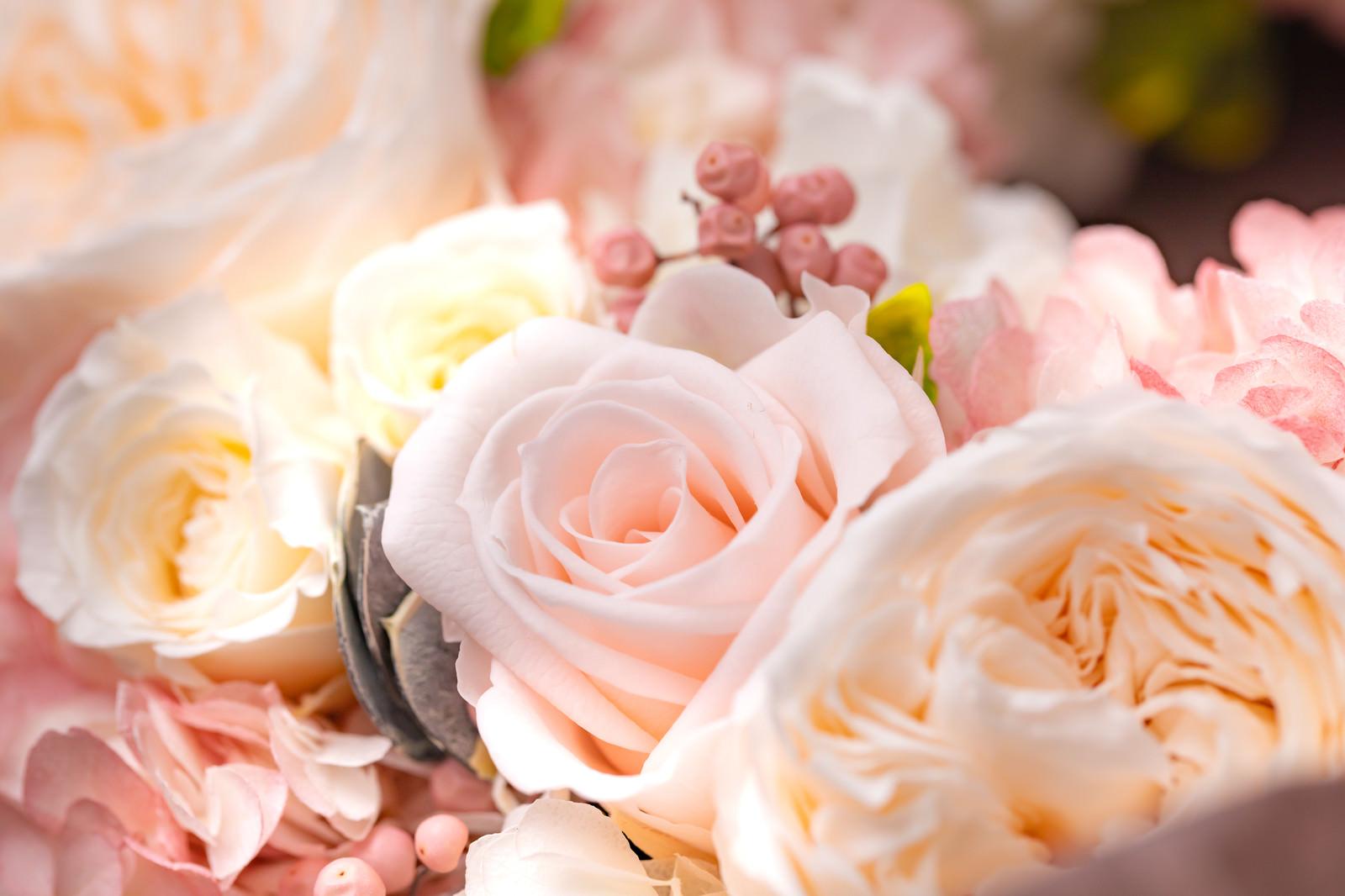 「薄いピンクのキュートな花」の写真
