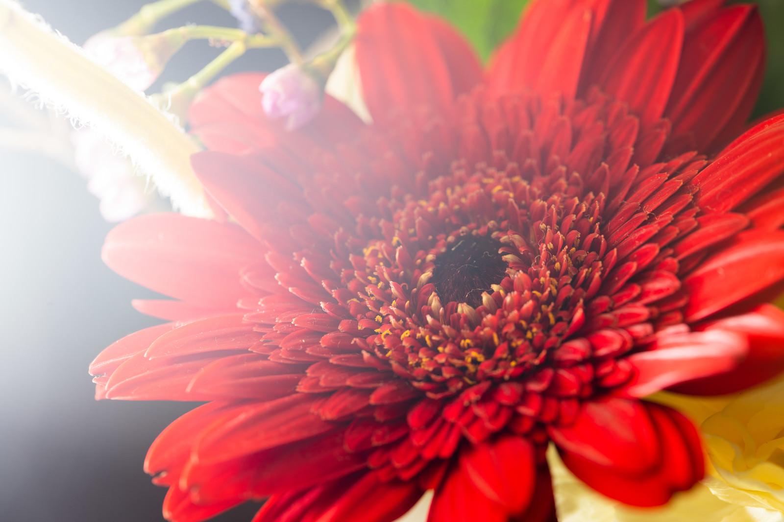 「光が差し込む赤い花」の写真