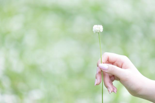 シロツメクサを持つ女性の手の写真