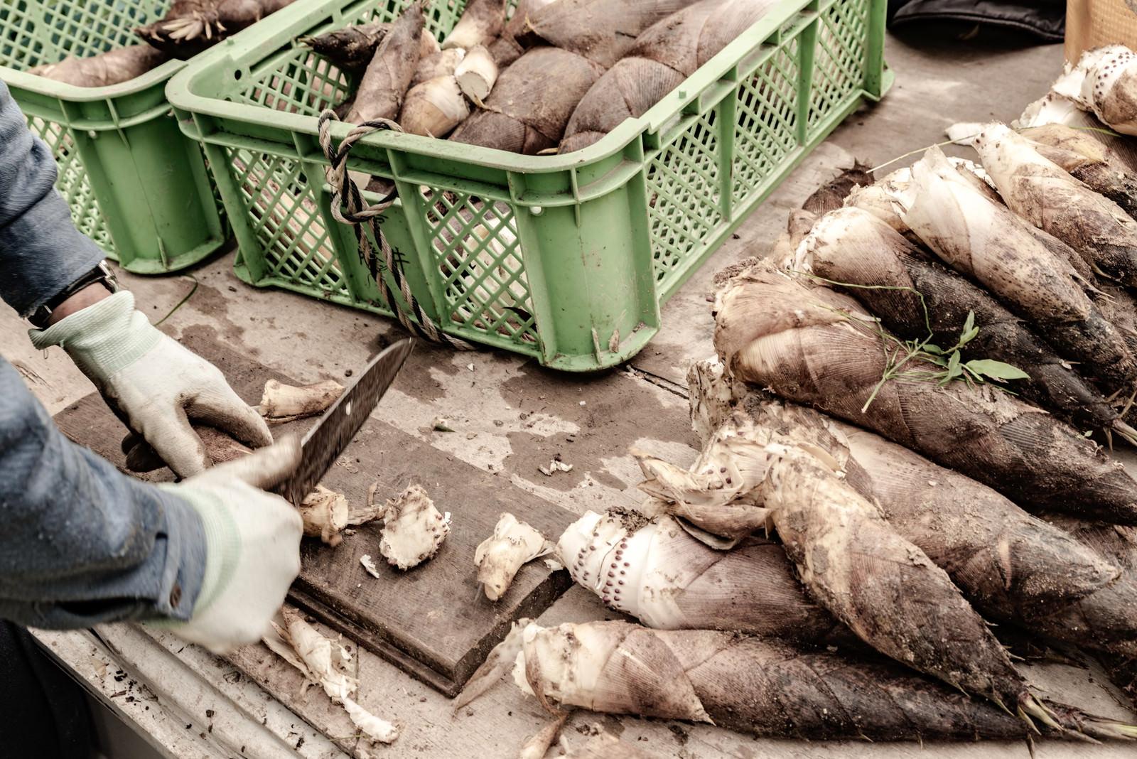 「出荷前に切り落とされるタケノコの根」の写真