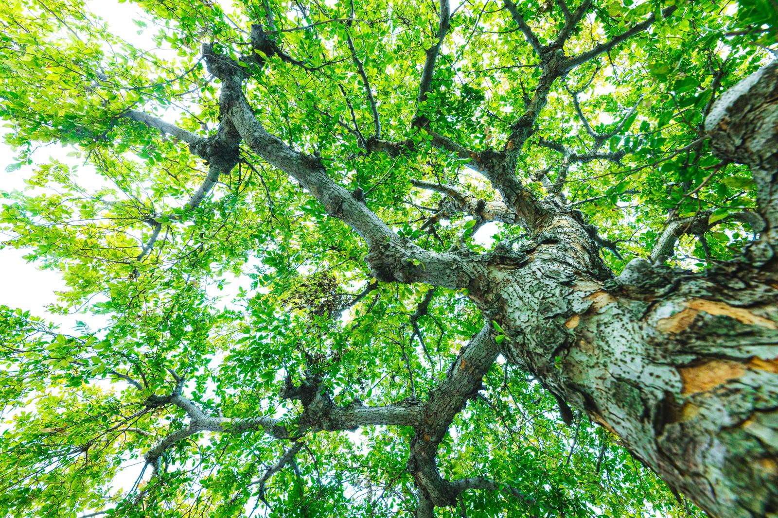 「超広角で新緑を撮影」の写真