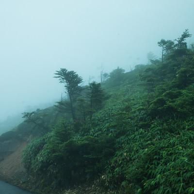 「山道の吹き荒れる風雨」の写真素材