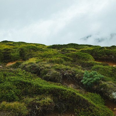 「高山植物」の写真素材
