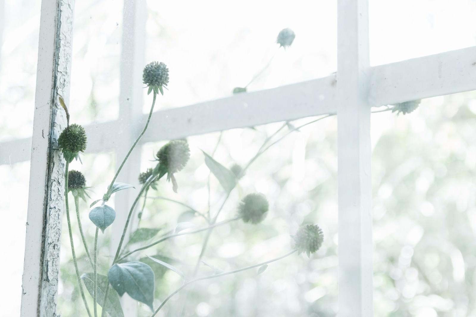 「古びた窓枠と植物」の写真