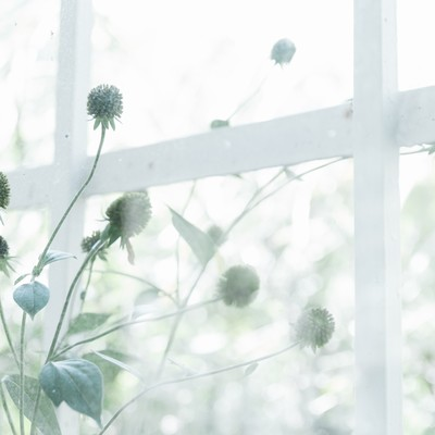 「古びた窓枠と植物」の写真素材
