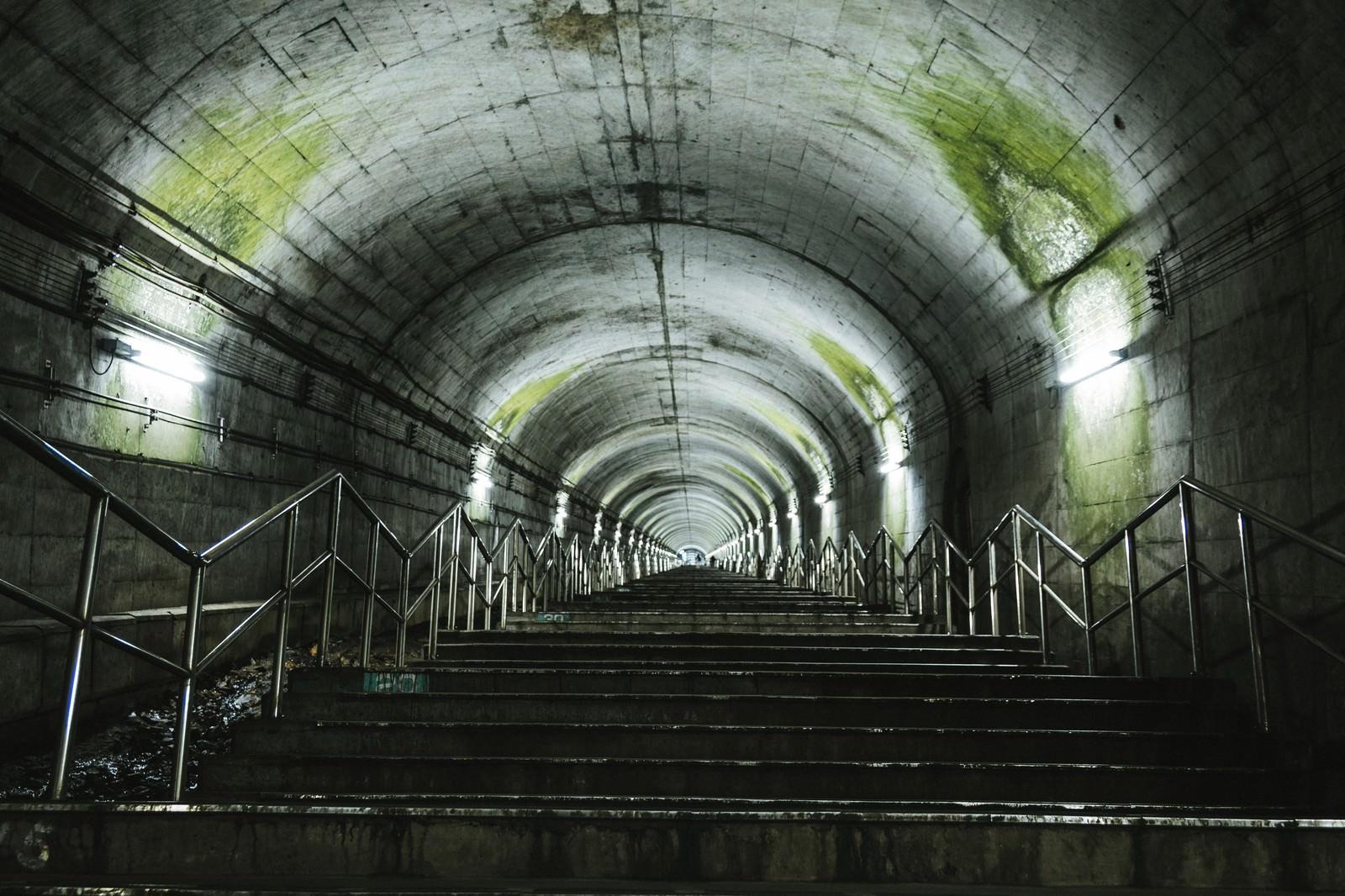 「トンネルの天井にこびり付いた苔(土合駅の階段)」の写真