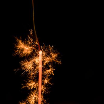 儚く短命な線香花火の終わりの写真