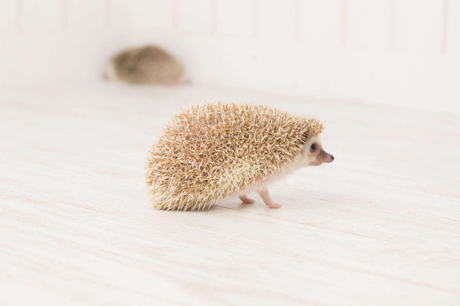 「すれ違いの関係(ハリネズミ)」の写真
