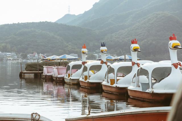榛名湖のスワンボート(群馬県)の写真