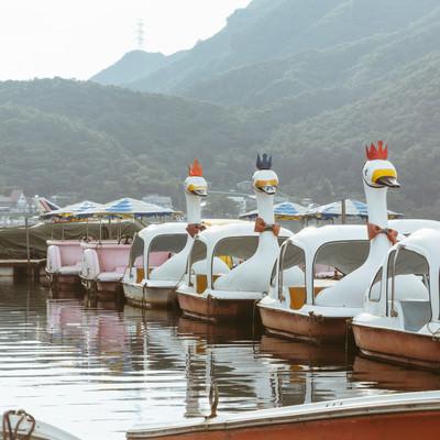 「榛名湖のスワンボート(群馬県)」の写真素材
