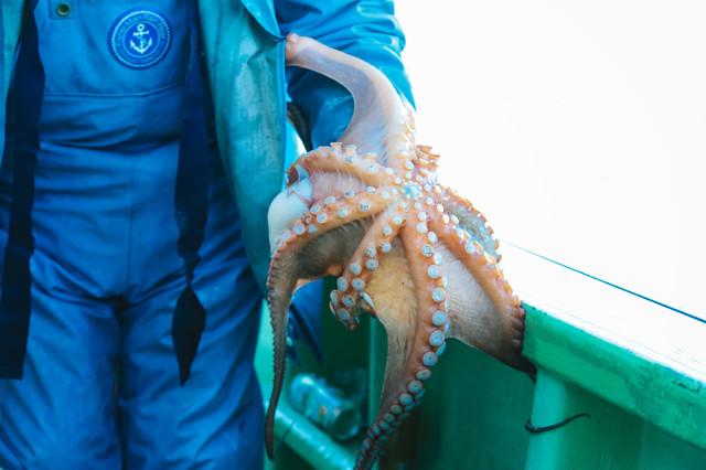 腕に纏わりつく水蛸の写真