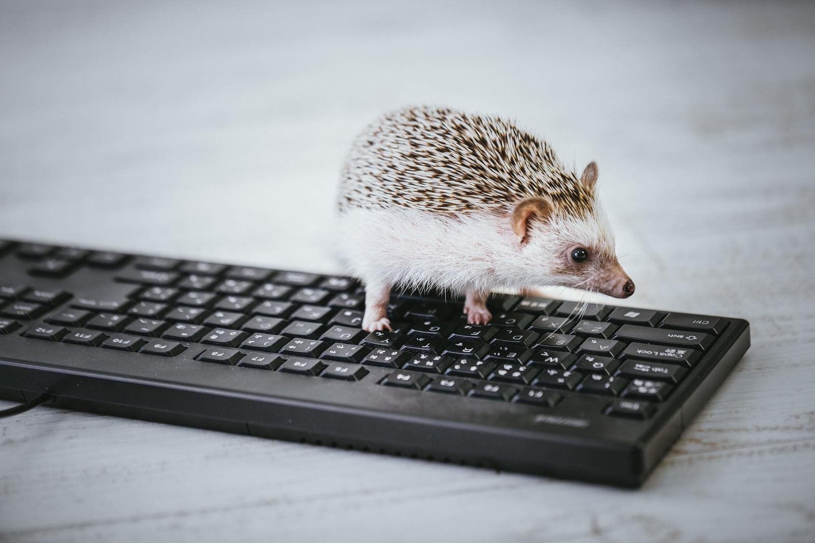 「データ入力中のハリネズミ部長」