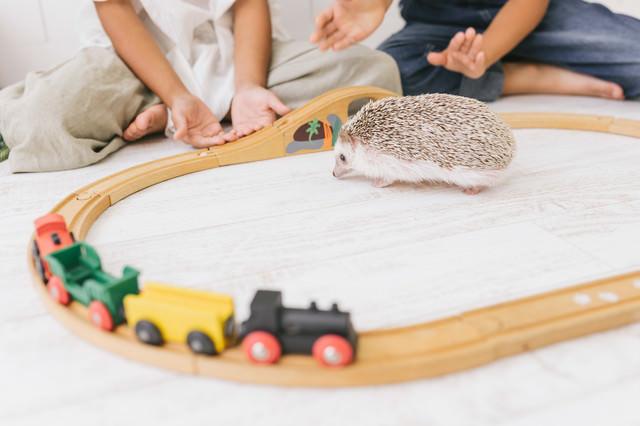 子供たちと触れ合うハリネズミの写真