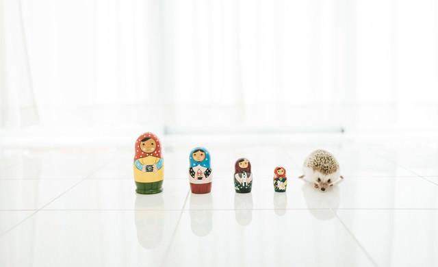 マトリョーシカ人形とハリネズミの写真
