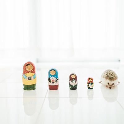 「マトリョーシカ人形とハリネズミ」の写真素材