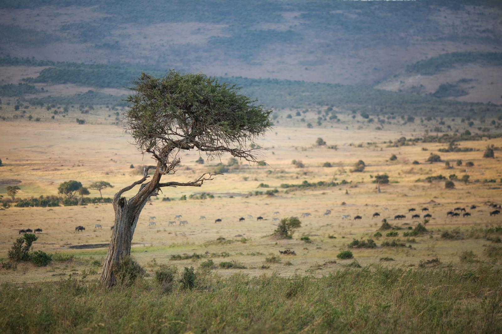 「サバンナの景色」の写真
