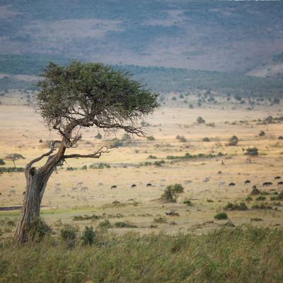 「サバンナの景色」の写真素材