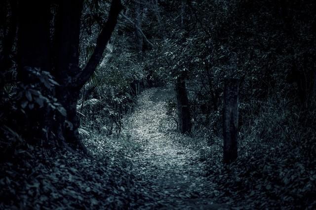 「不気味な獣道」のフリー写真素材