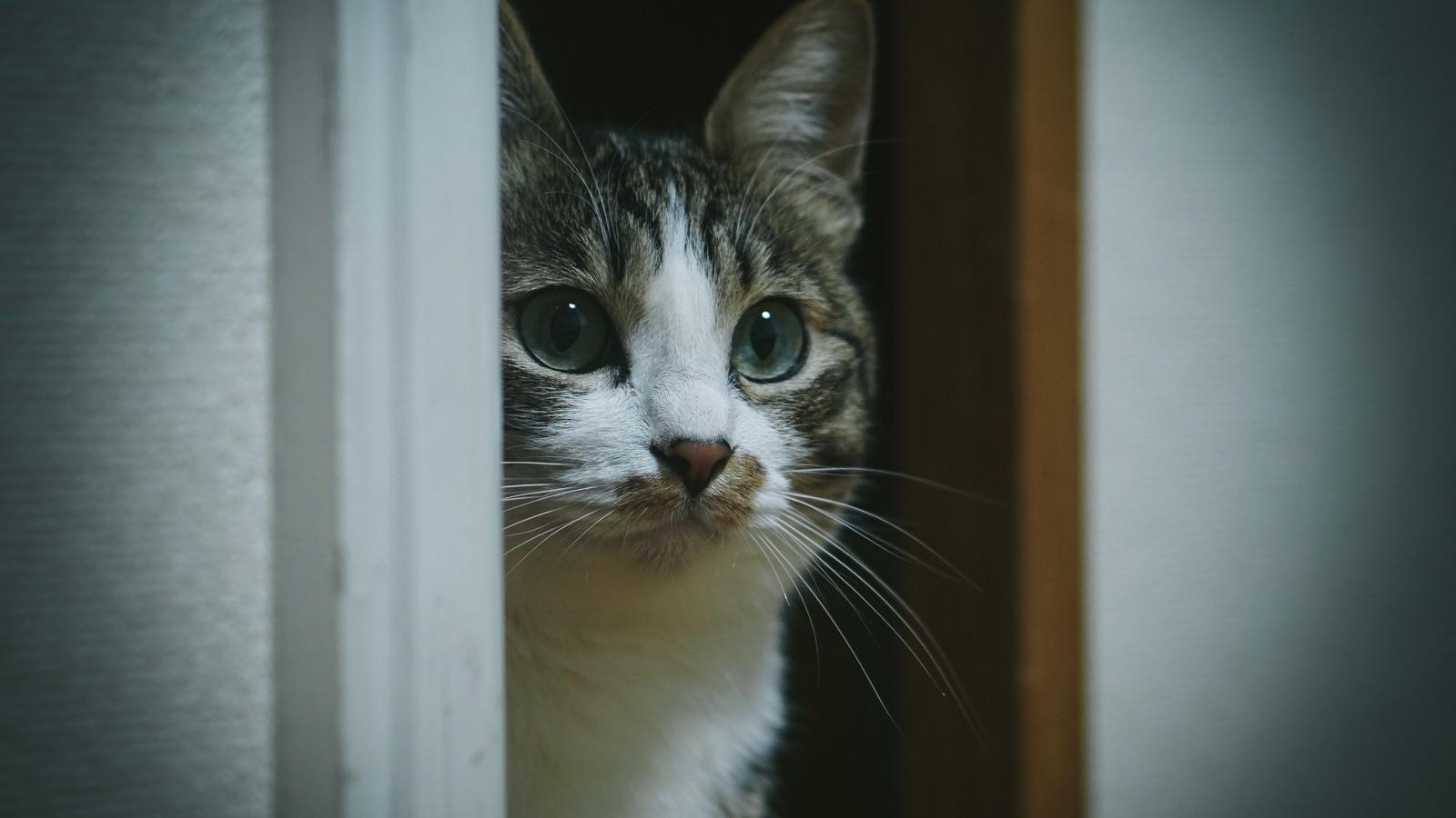 「!? (・・・知らない猫おる)」の写真