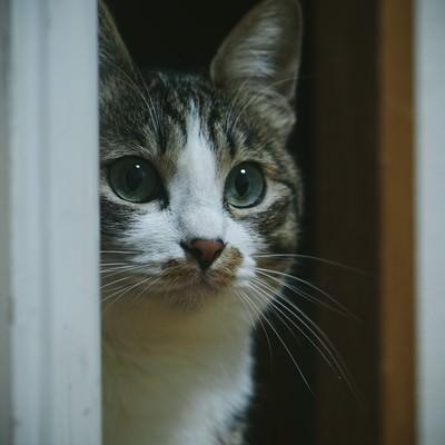 「!? (・・・知らない猫おる)」の写真素材
