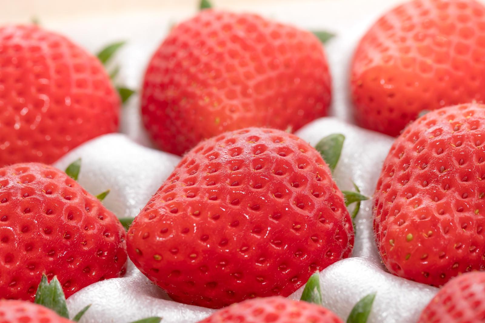 「高級な苺」の写真