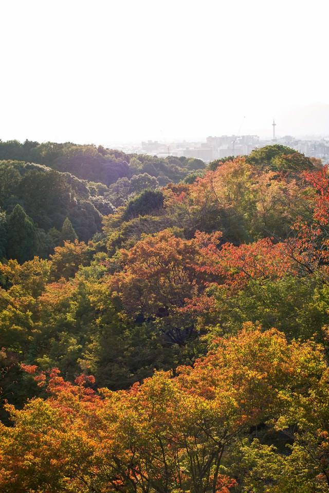 色づき始めた木々の写真
