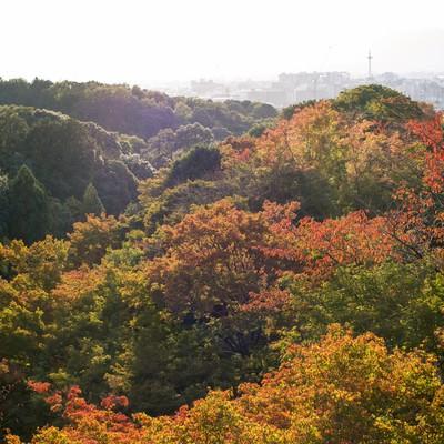 「色づき始めた木々」の写真素材