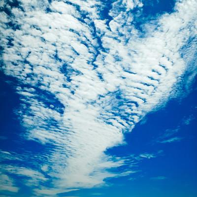 青空の羊雲の写真