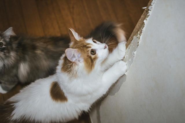 家の壁で爪を研ぐ猫の写真
