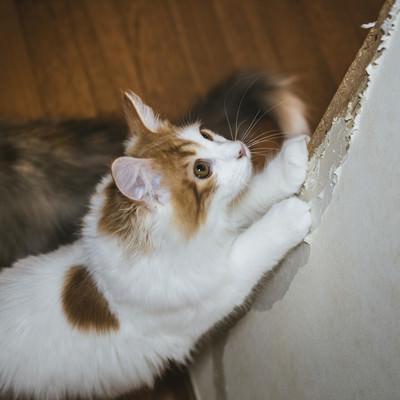 「家の壁で爪を研ぐ猫」の写真素材