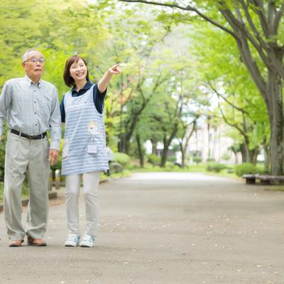 新緑の公園を散歩するの写真