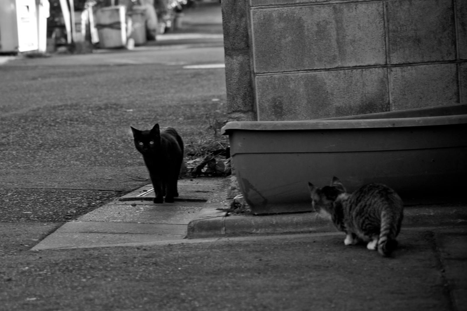 「待ち伏せ子猫」の写真