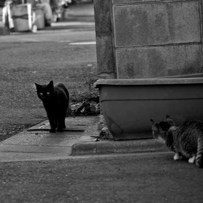待ち伏せ子猫の写真