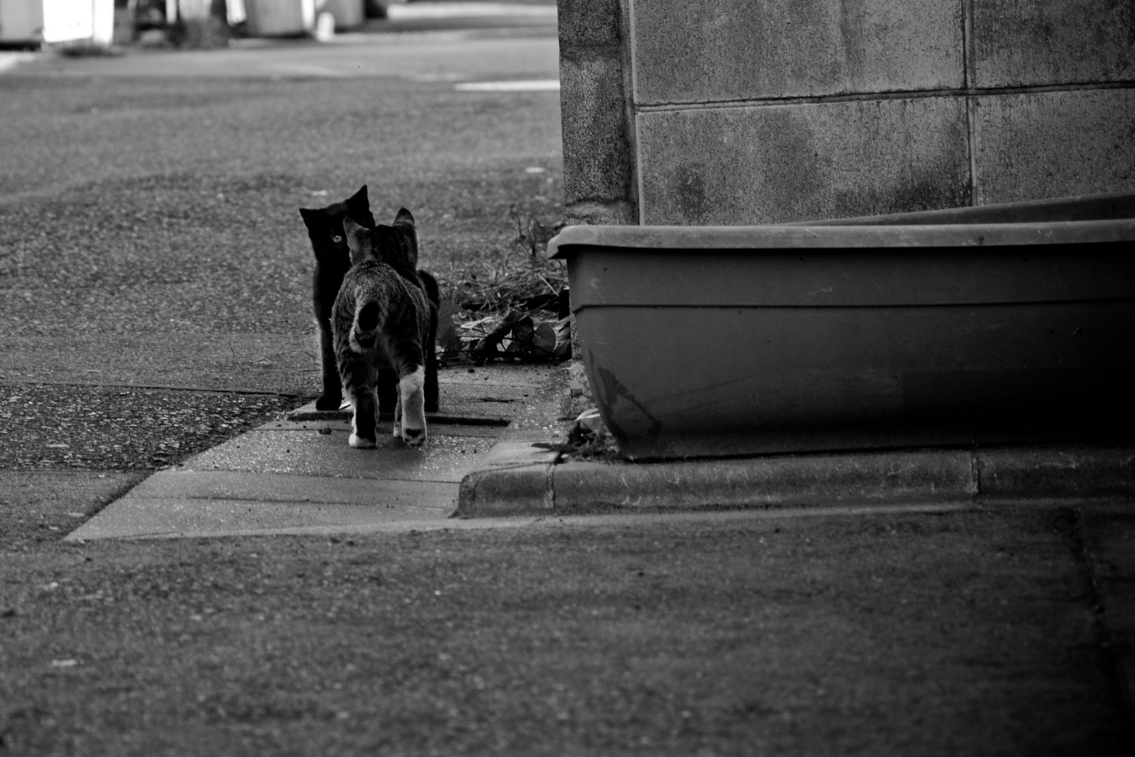 「仲良し子猫」の写真
