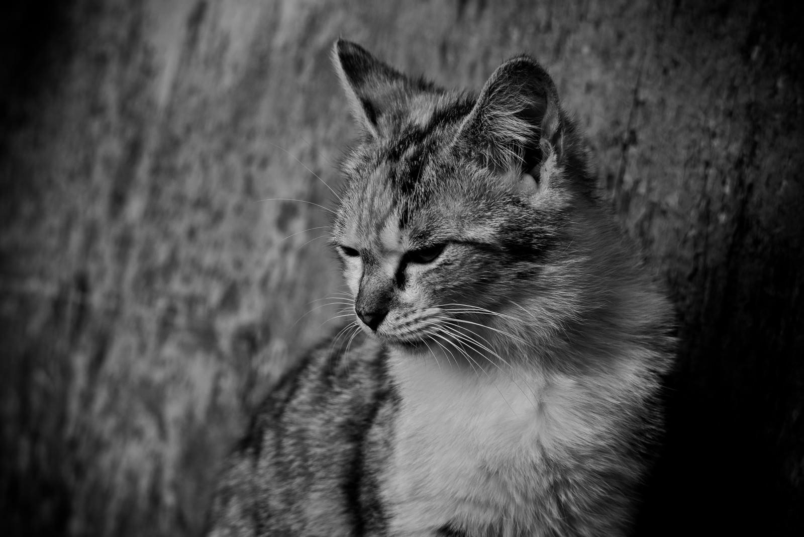 「意気消沈猫」の写真