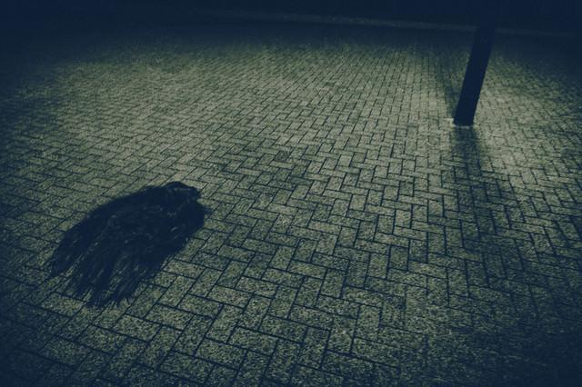 暗闇の路上に取り残された女性の髪の毛のような物体の写真