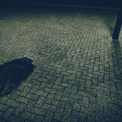 「暗闇の路上に取り残された女性の髪の毛のような物体」の写真素材