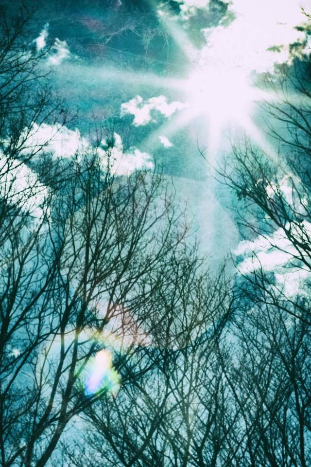 逆光の星芒の写真