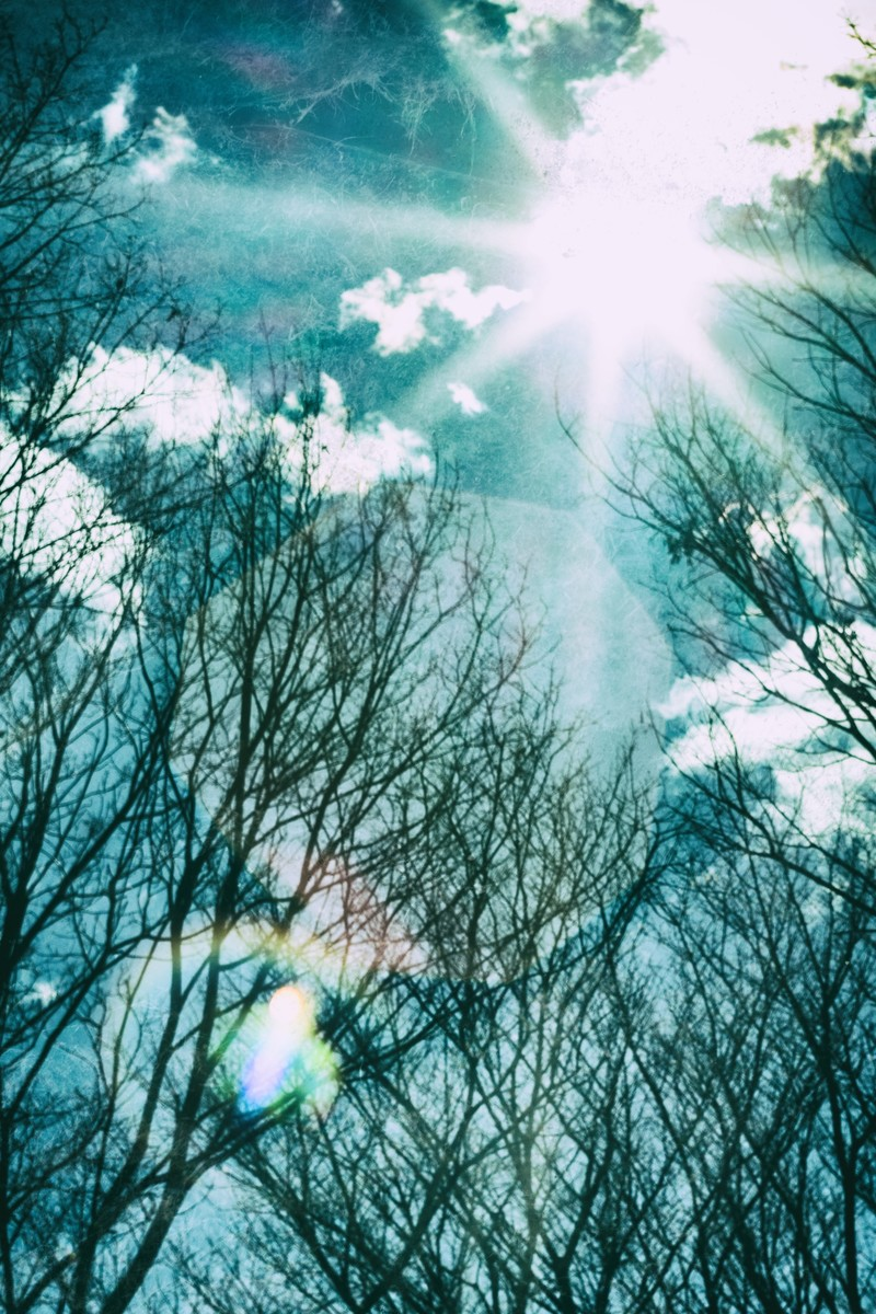 「逆光の星芒」の写真