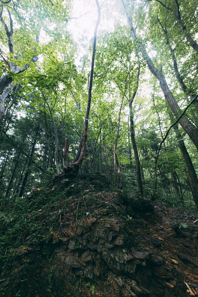 「岩の上に生える木々」の写真