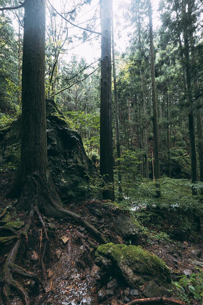 「雨上がりの渓流沿いの木と岩」の写真