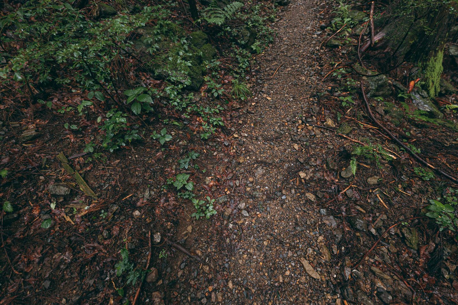 「湿った山の中の道」の写真