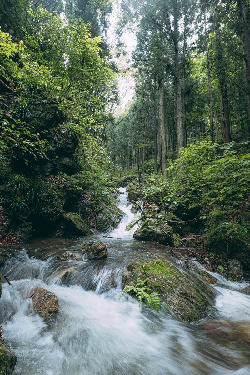 「森に囲まれ勢いよく流れる渓流」の写真