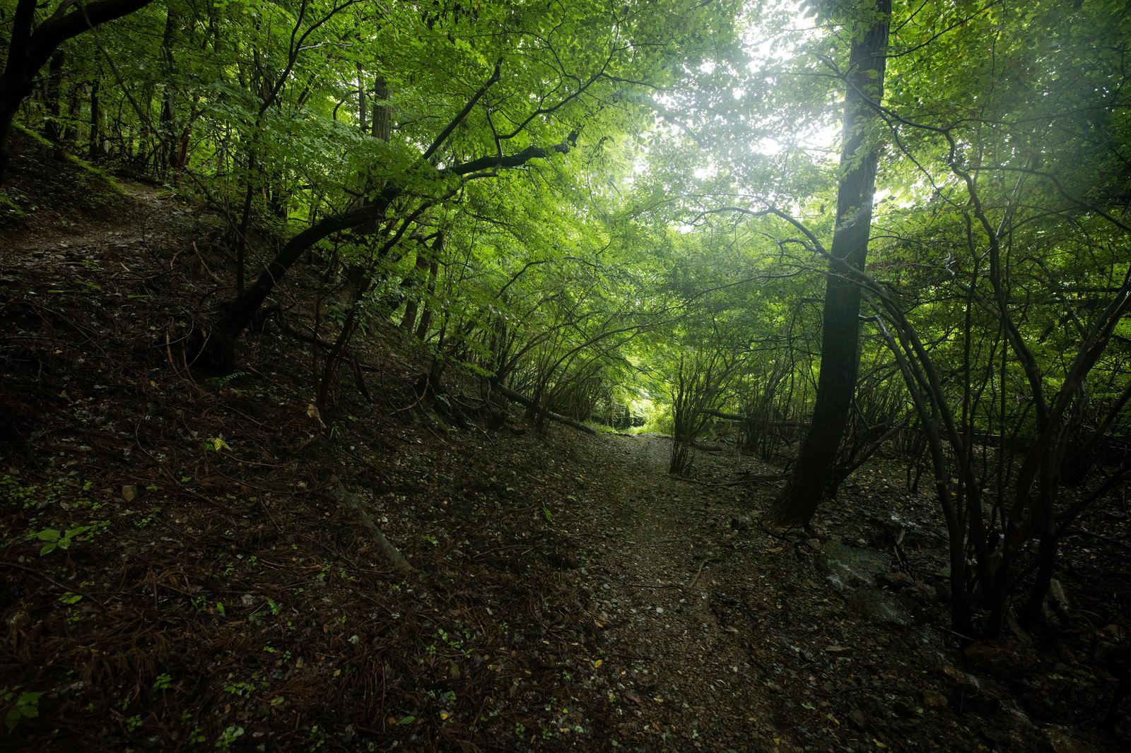 「木に覆われた道を進む」の写真