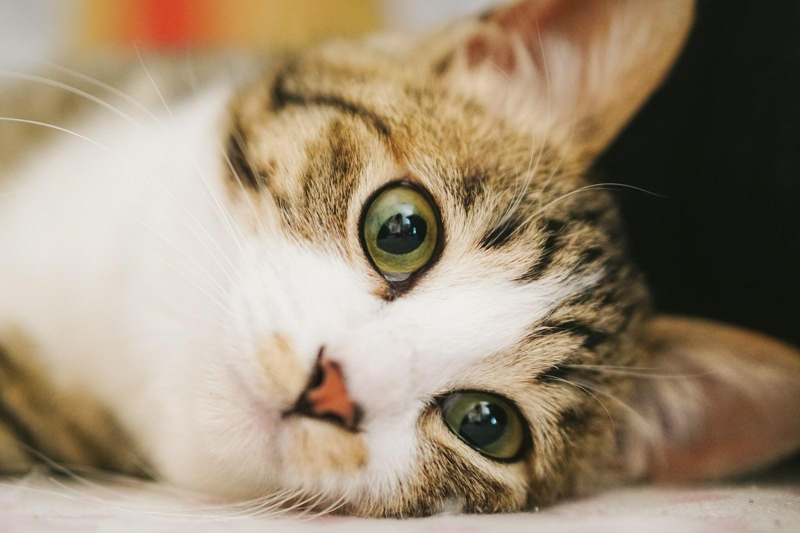 「怠け者も興味津々(猫)」