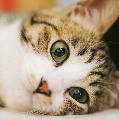 怠け者も興味津々(猫)の写真