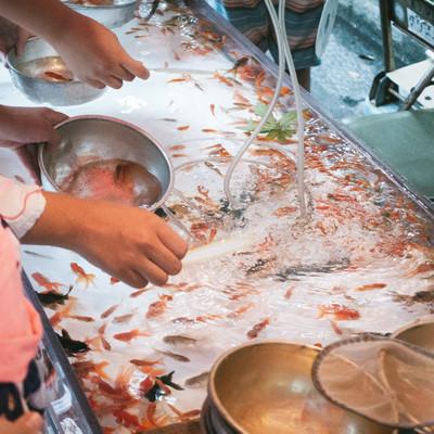 金魚すくいの様子の写真