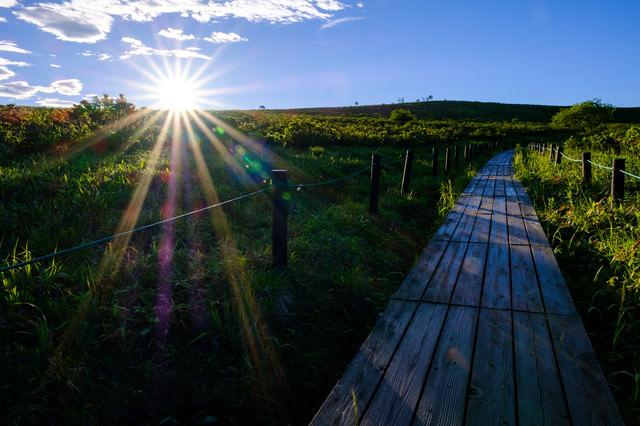 霧ヶ峰高原・夏の日差しと遊歩道の写真